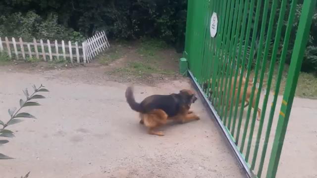 Odważne psy w akcji
